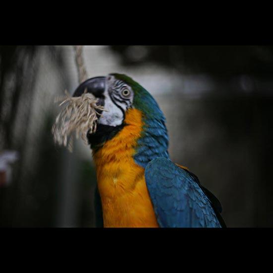 Mic-Macaw